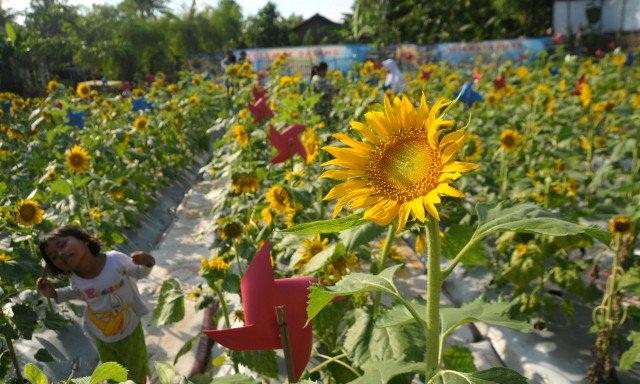 Berkunjung Ke Taman Wisata Bunga Matahari Di Bekasi Info Bekasi